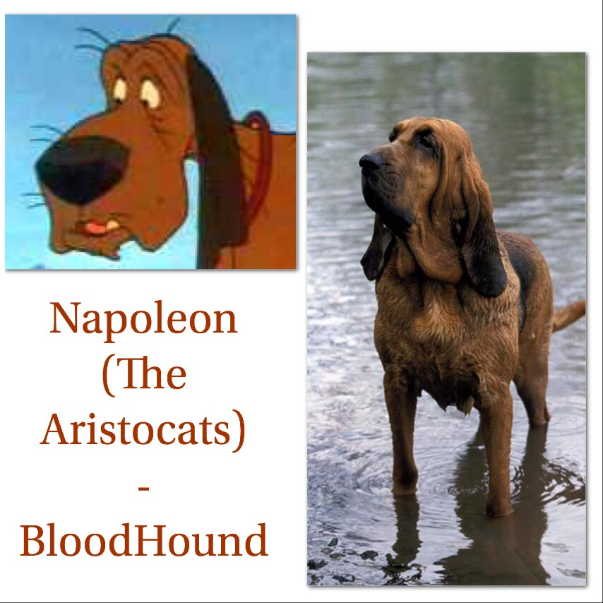 What are the Dog Breeds of These Famous Disney Films?